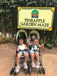 Dole Plantation with Toddlers Gone with the twins