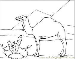 Desert Animals Camels Lizard Coloring Pages