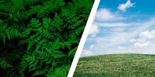 luftfeuchtigkeit in räumen pflanzen können helfen