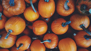Local Pumpkin Patches Dayton Ohio by Fall Festivals Across America Intown Suites