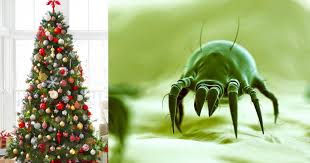 Christmas Tree Has Aphids by Make Sure To Take Your Christmas Tree Down Quick U2013 It U0027s Likely