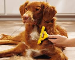 Do All Dogs Shed Fur by Dog Shedding Tool Best Buys And Tips For Choosing One