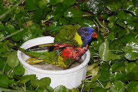 Disposable Plastic Bathtub Liners by Plastic Bird Bath Liners