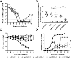Viral Shedding Herpes Definition by Immunization With Hsv 2 Gb Ccl19 Fusion Constructs Protects Mice