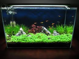 Follow Me And Watch My ADA 60P Be Transformed Into A Blissful ... Aquascape Purwokerto Indoaquatic With Fauna My Hutan Beltakan Youtube The Beauty Of Undwater Pembasmi Algae Eaters Natural For Aquascaper Aquascape Fix Marin Review And Use Simons Blog Aquaculture Extension Mgenal Hardscape Aquarium Selain The Month September 2008 Pinheiro Manso Aqua Scapefix Specialty Iwagumi Aquascaping Style By Theaquariumguidecom Aqua Scape Fix 250 Ml Can Reusable Coral Decorationglue 20 Long Aquascaping World Forum