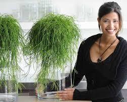 plante de bureau le rhipsalis une plante au pouvoir antistress chez soi
