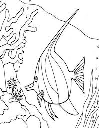 Angel Fish Between Coral Reefs Colouring Page Coloring