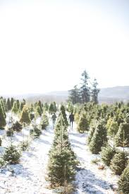 Fraser Christmas Tree Farm by Best 25 Christmas Tree Farms Ideas On Pinterest Christmas Tree