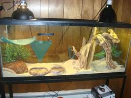 need help finding stuff for a bearded cage reptile forums