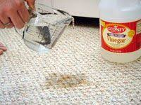 Dog Urine Wood Floors Vinegar by How To Clean Dog Urine How To Clean Things