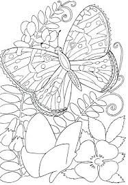 Full Image For Butterfly Among Flowers Coloring Page Printable Pages