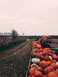 Pumpkin Patches Near Colorado Springs by Best 25 Pumpkin Picking Ideas On Pinterest Fall Pics Halloween