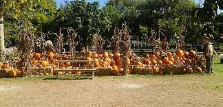 Coconut Grove Pumpkin Patch by Little Farm Pumpkin Patch Florida Haunted Houses
