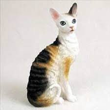 Most Popular Cat Breeds That Don t Shed a Lot Melpomene