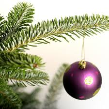 Fraser Christmas Trees Uk by Real Fraser Fir Christmas Trees The Christmas Forest
