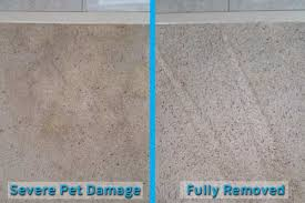 pet stain odor removal contour cleaning