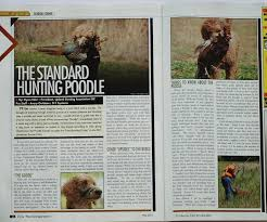 Chesapeake Bay Retriever Shed Hunting by Louter Creek Red Hunting Poodles