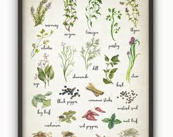 Herbs And Spices Watercolor Kitchen Wall Art Poster