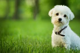 Best Mini Dogs That Dont Shed by The 10 Best Dogs For Kids And Families Petmd