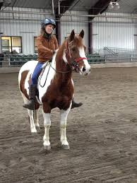 Best Horse Shedding Blade by How I Work Sue Penney Continuum University Of Minnesota Libraries