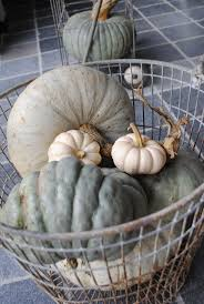 Mrs Heathers Pumpkin Patch Albany by 288 Best Pumpkins Images On Pinterest Fall Pumpkins And Autumn