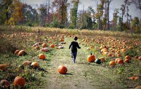 Pumpkin Picking In Freehold Nj by Don U0027t Miss These 12 Great Pumpkin Patches In New Jersey This Fall
