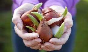 alan titchmarsh tips on planting bulbs in autumn garden