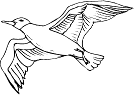 Sea Bird Coloring Pages