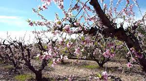 Schnepf Farms Halloween 2017 by Schnepf Farms Peach Blossom Celebration Youtube