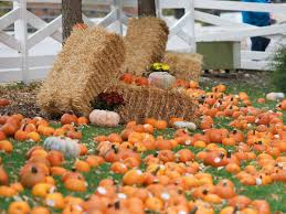 Bengtson Pumpkin Farm Chicago by Pumpkin Farms In Chicago Area A Fall Family Guide Chicago Tribune