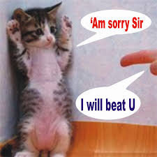 cat stop learn 12 smart ways to stop your cat to be aggressive