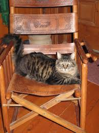 A Long-Tailed Cat In A Room Full Of Rockers | Comical Cats