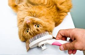 bathing cats cat grooming tips aspca