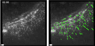 This New Microscope Tracks The Position Orientation Of Individual Molecules Within Living Cells Bitly 2dpdYJY