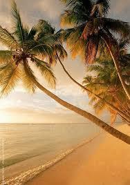 Best 25 Palm Trees Beach Ideas On Pinterest