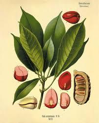 siege social botanic the botanical secret kola nitida botanic lab