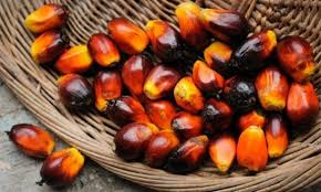 The Use Of Oil Palms By Humans May Date As Far Back 5000 Years In West Africa
