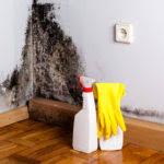 mietminderung bei schimmel im schlafzimmer mietkürzung