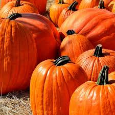 Bishops Pumpkin Farm Employment by State College Pa Centre County Gazette Reporting Centre County