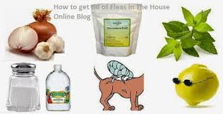 101 DIY home reme s to rid of fleas naturally pletely in