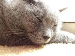 clindamycin for cats giving a cat a pill thriftyfun