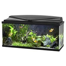aquariums et meubles aquariophilie animalis