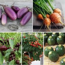 potager au balcon des légumes adaptés à la culture en pot