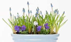 gardens want bulbs for easter then and style