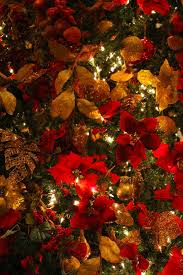 Poinsettia Christmas Decorations Awesome Tree Themes And Gold