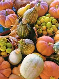 Marana Pumpkin Patch Field Trip by Martha Burgess Savor The Southwest