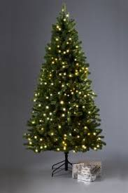 Pre Lit Pencil Christmas Trees Uk by Buy Christmas Christmas Trees Lit Christmastrees From The Next Uk