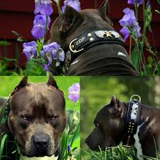 Top4dogs - Posts | Facebook Fueled By Fass Wwwfassridecom Fass Fuel Systems Huida Qianmeiextra 20off Type A High Precision Mini Optical Power Meter For Ftth Cctv Catv Tools New Oem Yamaha Marine Water Pump Impeller Repair Kit 689w78a400 Add A Little Bling Xara Plus Filter Forge Video 1 Xdp Cde Message Specifications Xtremedieselcom Coupon Promo Codes Intel Itpxdp 3br E17244001 Target Probe And 50 Similar Items Luxury Bags Discount Code Xdp Diesel Power Perfume Coupons Deebot M80 Coupon Code Igpcom Solved Hydrogen Gas Is Compressed In Pistoncylinder De