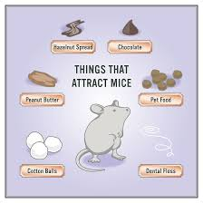 How To Get Rid Of Mice In 5 Easy Steps | Helpful Hints | Pinterest ... Details Amazoncom Bonazza Mice Repellent Plugin Ultrasonic Pest The Battle Of And Men Pparedness Pro How To Get Rid Of Permanently Without Professional Help Youtube Control 1 Resource For Horse Farms Stables Riding Rats In Your Barns Stall13com Videos To Naturally Natural Rat Guide 5 Easy Steps Helpful Hints Pinterest Chicken Chick 15 Tips Rodents Around Coops Just One Bite Ii Bars And Killer8lbs8 16 Oz Bars Pet Coats Hairless Rex Harley Uerstanding Fancy Keep Other Out Your Car Engine