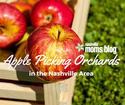Pumpkin Patch Near Nolensville Tn by Apple Picking Orchards In The Nashville Area